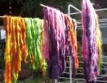 Gotland wool dyed and drying