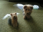 Yorkie Angels
