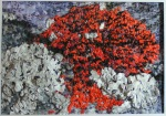 Tyvek and Hand Stitched Lichen