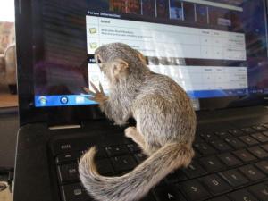 forum squirrel 2