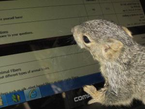 forumafsquirrel