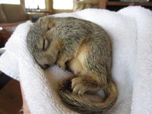 squirrel 001