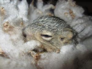 squirrel 005