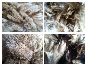 comp of raw wool