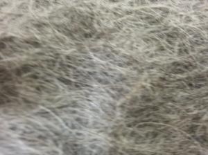 Grey Massam