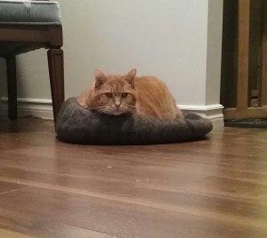 Beths cat