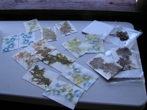 Ruth's Eco Printed Paper