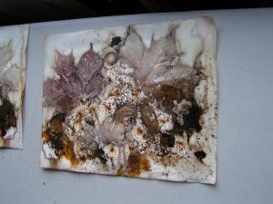 Leaf Prints with Iron Powder