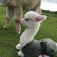 CRIA IN JACKET 2