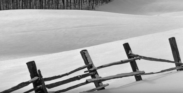 5.1 Fence posts in winter Gray scale